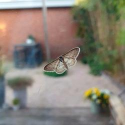 Kleine nachtvlinder