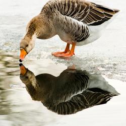 Mirror mirror ...