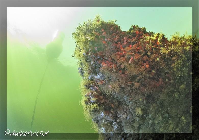 Begroeid wrak in de zon - De voorkant van het begroeide wrak wijst naar boven richting de boei.