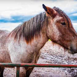 Paard vraagt om aandacht
