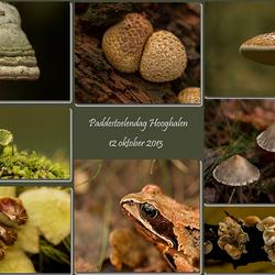 Paddestoelendag Hooghalen (compilatie/collage)