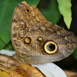 vlinder in een vlindertuin zuid frankrijk 1