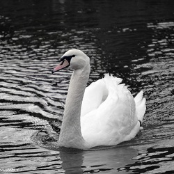 White Beauty..
