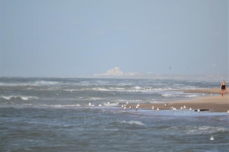 Het strand met een zweverige verte... - Zee en meeuwen op de voorgrond, dame op recht en vliegers in de verte.<br /> Nog verder naar achter de stad..