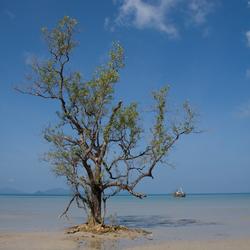 Koh Mak strand