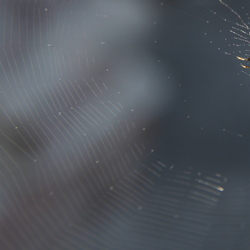 Spin in web