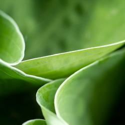"""Green leaves"""