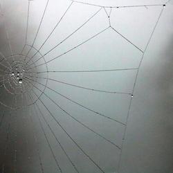 Mist spinnenweb