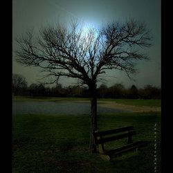 Moonlight shadow ©