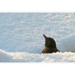 Winter 2012 (3)