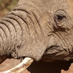 Details van de olifant