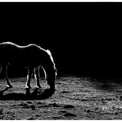 Backlight horse