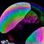 spelen met zeepbellen