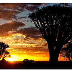 'Quiver Tree Sunset II'