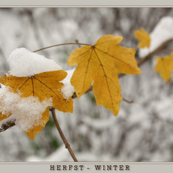 Herfst of toch Winter...