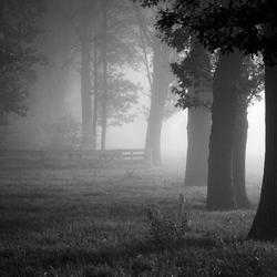 Holten in de mist