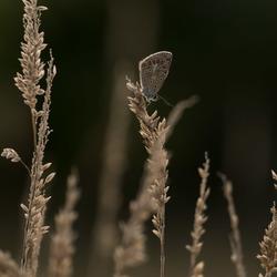 Vlinder in de avondzon