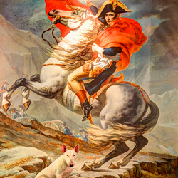 Napoleon's pets