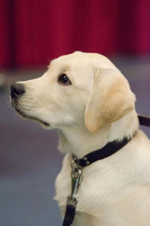 Pup 1 - Bij de hockeywedstrijden was ook deze toeschouwer aanwezig