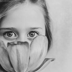 Tulip`s eyes.