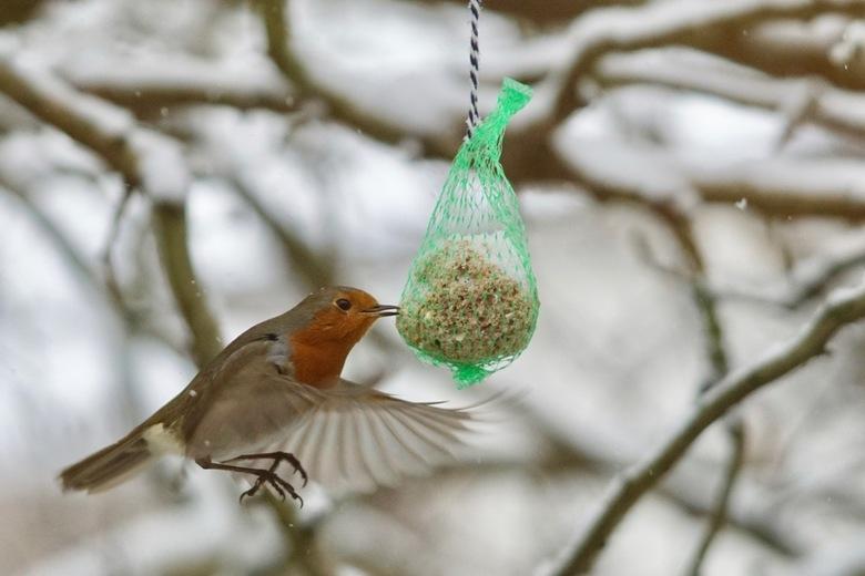 Kolibri allures -