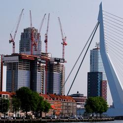Rotterdam Zwaan