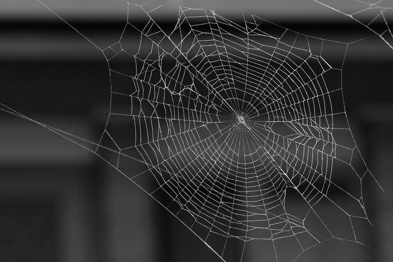 Spinnenweb in zwartwit - Ik heb iets met spinnenwebben, niet met spinnen, alleen als ze erg klein zijn.