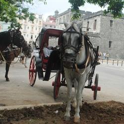 Havana - paard en wagen