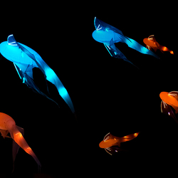 Glow  Swimming in the air
