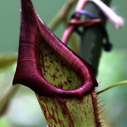 Hortus Botanicus -10-