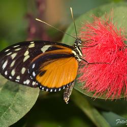 Vlinders in Artis 7