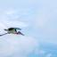 Vliegende maribu