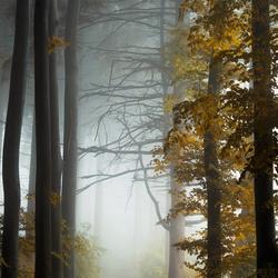 Darkest Autumn.