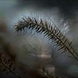 plant ..?