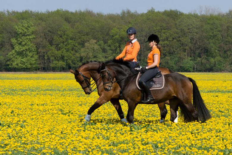 paard-en-bloemen - ...