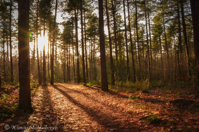 Winter namiddag in het bos - Prachtige namiddag in november