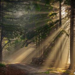Shine shine pine