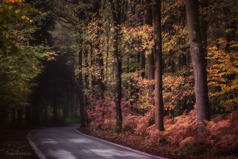 From Fall to Dark. -
