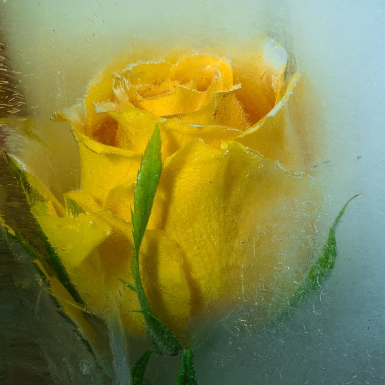 noor bloem 1 -