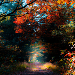 Path of colors