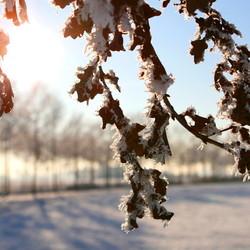 Winterwonderland Elst gld 2