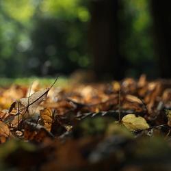 Zachtjes Herfst