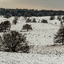 Sneeuw op de Posbank