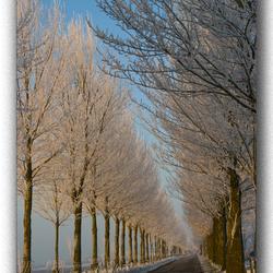 Winterlaan