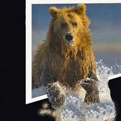 beer uit de muur