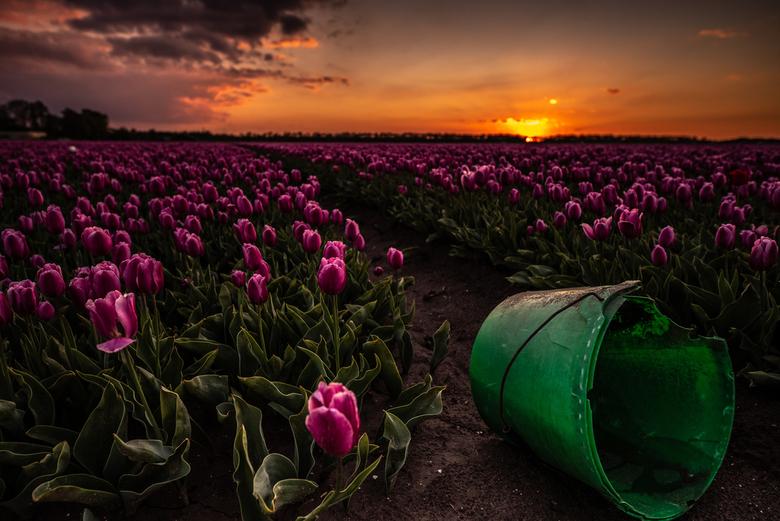 Tussen de tulpen - Zonsondergang tussen de tulpen bij Bant