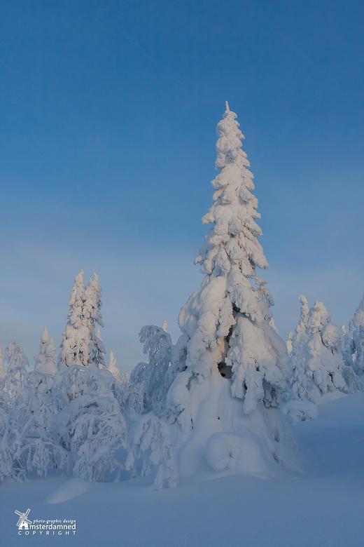Lapland - Van de afrikaanse hitte in vorige foto door naar de sneeuw in Lapland. Lekker wandelen in het poedersuiker landschap van het finse Iso Syote