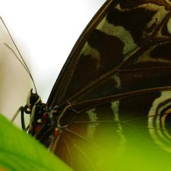 vlinder dichtbij