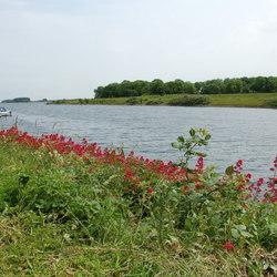 Buitenhaven Veere