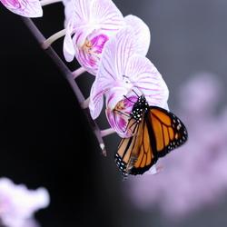 orchideeenhoeven